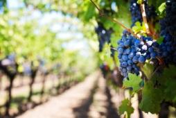 Wine tours Chateaumeillant Loire Valley France