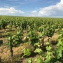 Châteaumeillant Wine and Food Tours and Tastings, Loire Valley, France