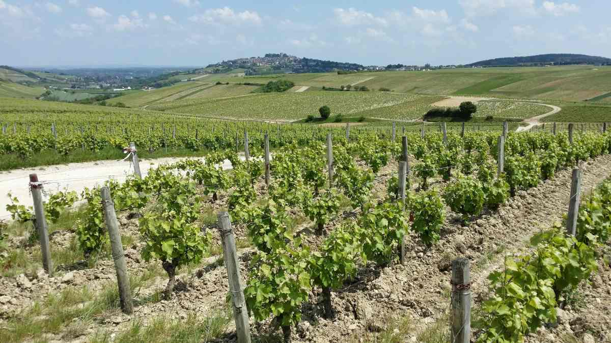 Sancerre Wine Online Experience